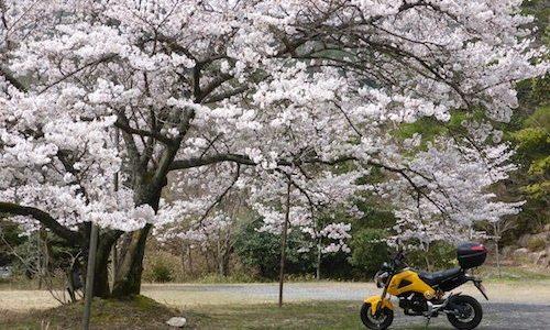 GROM 春爛漫ツーリング
