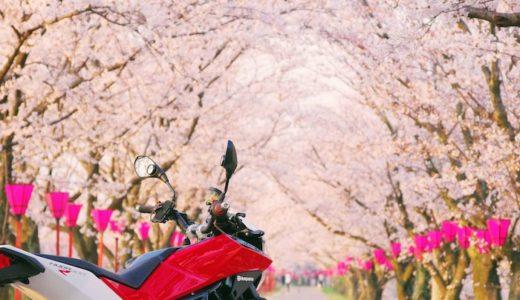 NUD900R 桜