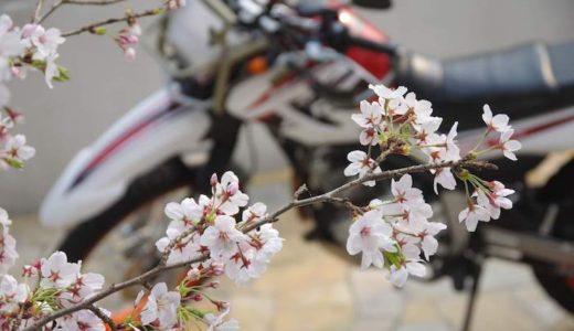 令和を迎える春