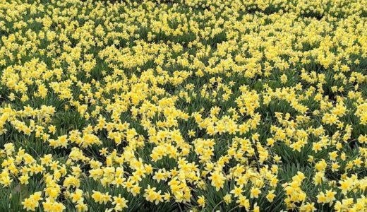 SEROW 山へ花見へ