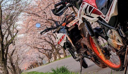 バイクと花と春の写真